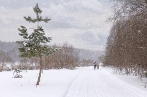 Гонка в снегопад (1)