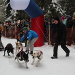 2 гонка упряжки лыжники  (1)